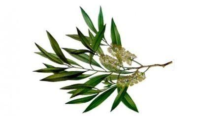 Αιθέριο Έλαιο Τεϊόδεντρο