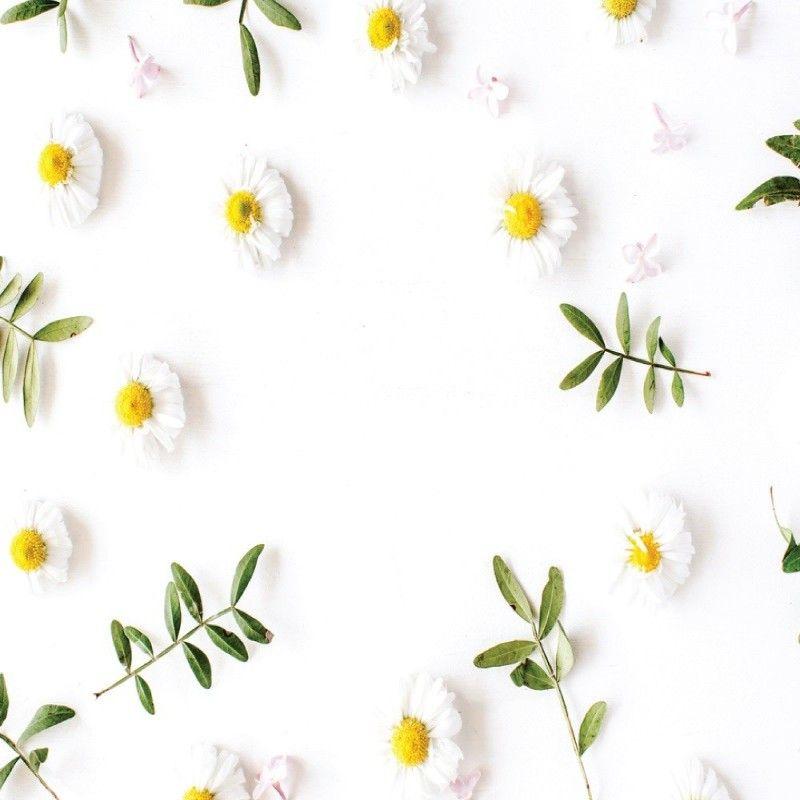 Κρέμα Άνθη Χαμομηλιού