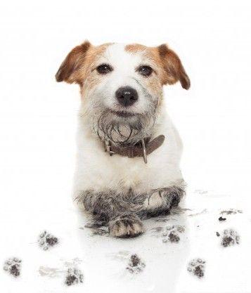 Μίγμα αιθερίων για Δυσοσμία Σκύλων