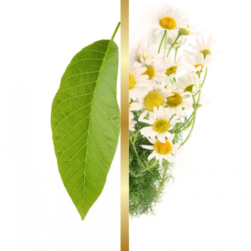 Σαπούνι Ελαιόλαδου Φύλλα Καρυδιάς & Χαμομήλι