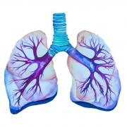 Μίγμα Βαμμάτων για Αποτοξίνωση Αναπνευστικού 50ml