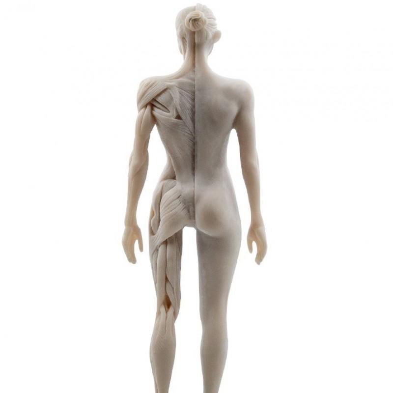 Μίγμα Βαμμάτων για Αποτοξίνωση Μυϊκού & Σκελετικού