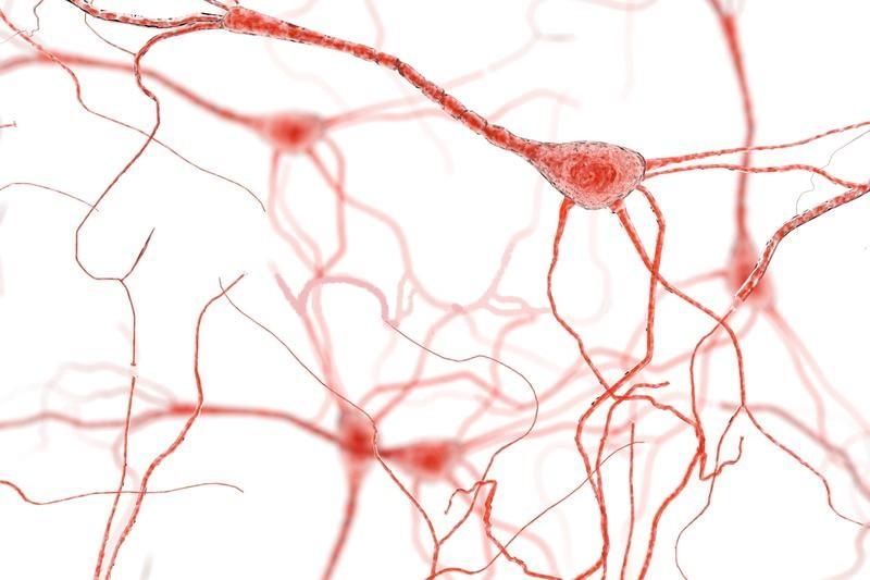 Μίγμα Βαμμάτων για Αποτοξίνωση Νευρικού Συστήματος 50ml