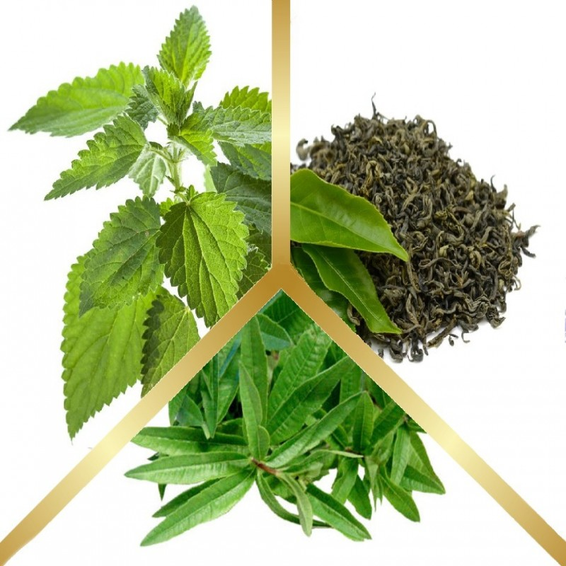Μίγμα Βοτάνων με Πράσινο Τσάι, Τσουκνίδα & Λουΐζα σε εμβαπτιζόμενα φακελάκια
