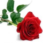 Αιθέριο Έλαιο Τριαντάφυλλο Absolute