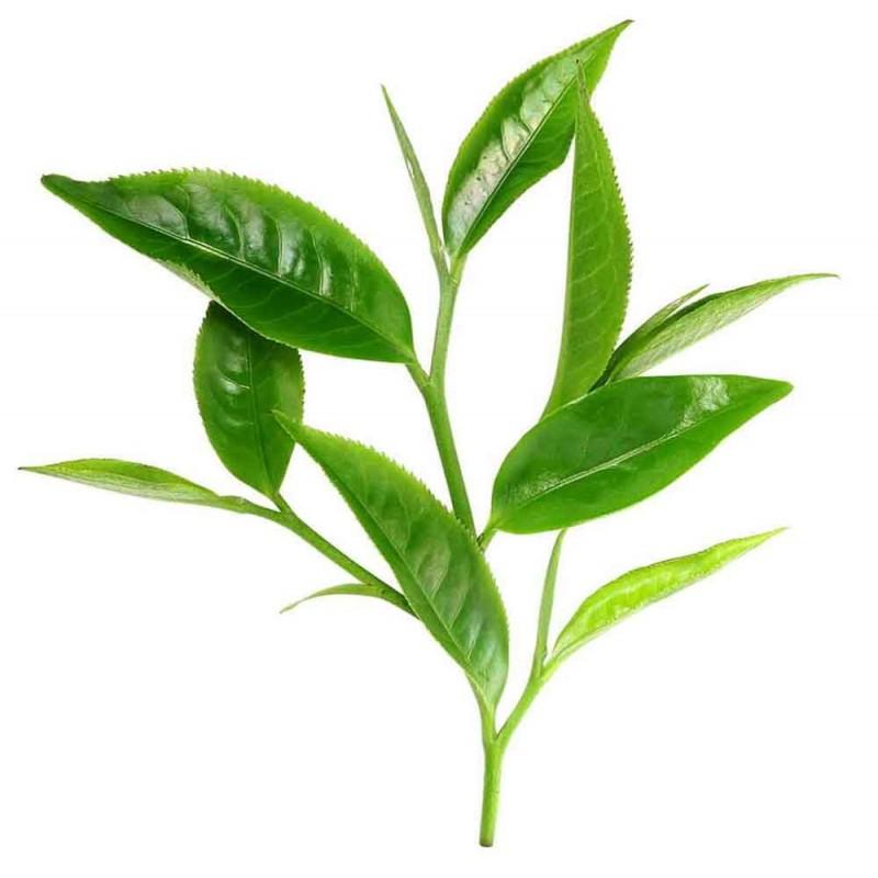 Αιθέριο Έλαιο Τεϊόδεντρο ΒΙΟ