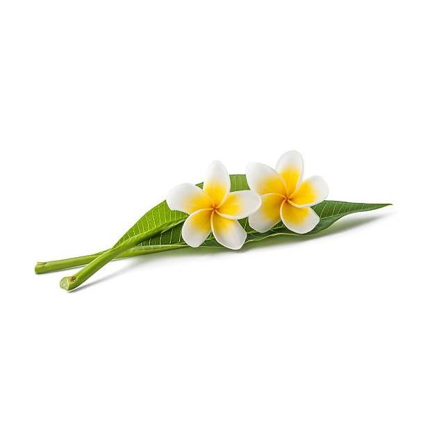 Βούτυρο Μονόι (Monoi de Tahiti)