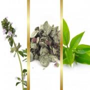Μίγμα Βοτάνων με Δίκταμο, Πράσινο Τσάι & Θυμάρι σε εμβαπτιζόμενα φακελάκια